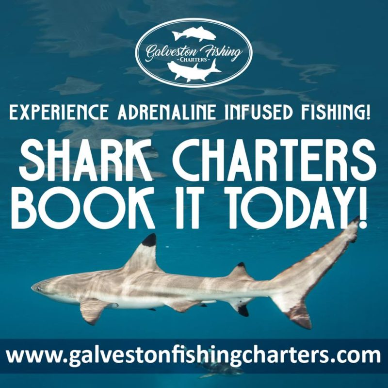 set your eyes on some shark fishing with GFC